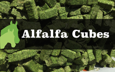 Image result for alfalfa cubes